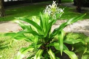 Giảm đau hiệu quả bằng náng hoa trắng